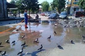 Sıcaktan Bunalan Güvercinler Serinlemenin Yolunu Buldu